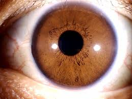 Close up view of a brown eye